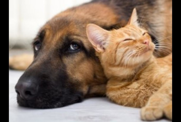 eating-cats-and-dog-banned_1536813667